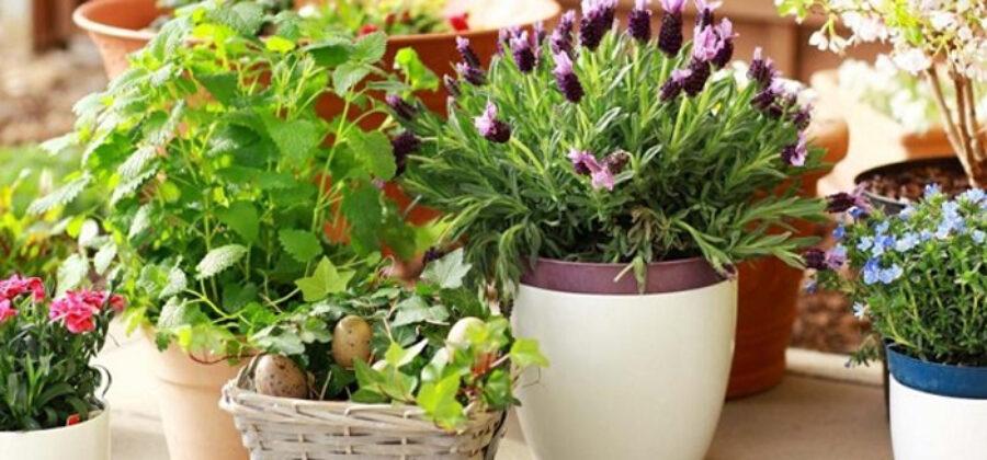 Средство для пышного роста комнатных цветов