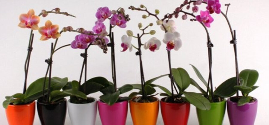 Лучшие советы по уходу за орхидеей, сохраните себе чтобы не потерять!