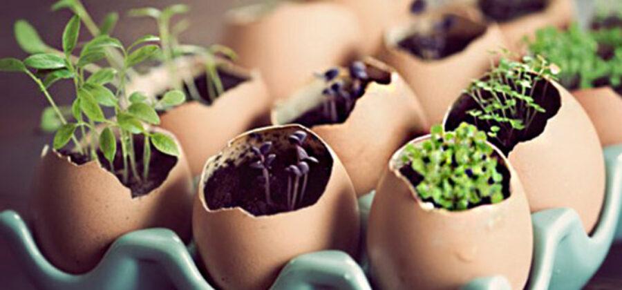 Какие семена нужно посадить в феврале?