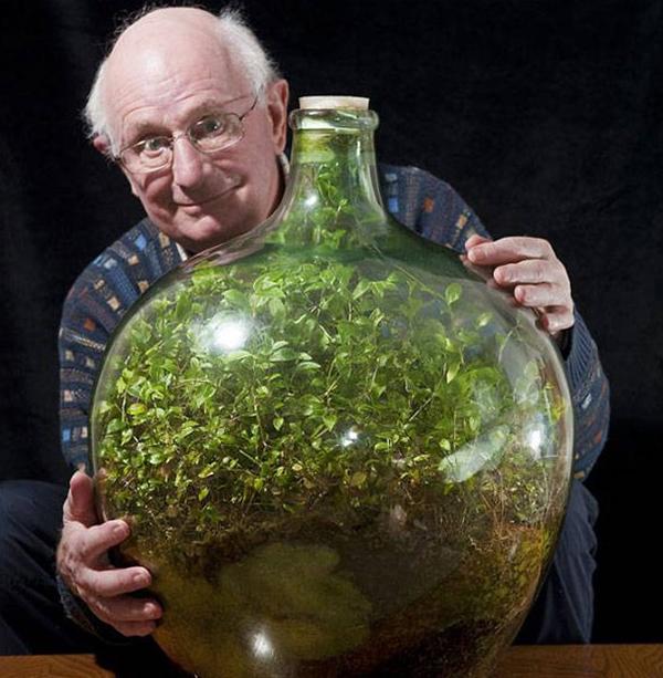 Этот мужчина посадил семена в бутылку более 50 лет назад… И вот что из этого получилось!