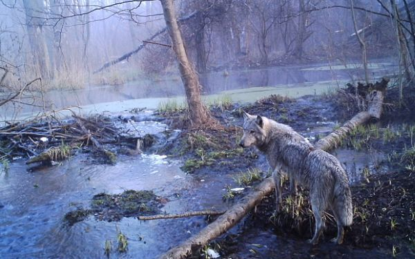 Вот что через 30 лет обнаружили в Чернобыле!