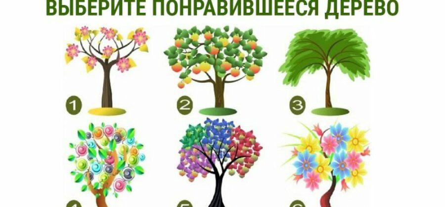 Шесть качеств характера — выбери дерево, и узнай о себе!