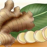 Если ежедневно употреблять имбирь, вот что будет происходить с вашим организмом!