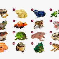 Тест: Выберите лягушку и узнайте ваш путь к богатству!